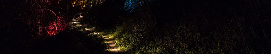 Grüne Lichtwege